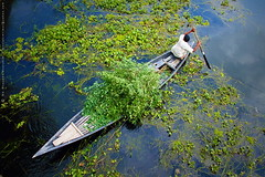 Boatman (mostakim timur) Tags: blue reflection tree green love beautiful beauty canon boat bill bush kiss wind human photowalk bil bangladesh monthly sb beloved boatman timur arial sku x3 sok 500d sbps mostakim t1i munsiganj mostakimtimur mdmoazzemmostakim shologhar