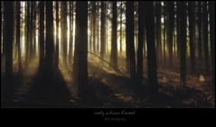 misty autumn forest (Zino2009 (bob van den berg)) Tags: morning trees sunset mist black nature fog forest sunrise dark bomen nebel magic frame wald mystic enchanted deventer dampf colmschate treesdiestandingup debannink toverbos bobphotography zino2009landscape