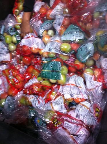 Sorting & bagging tomatoes