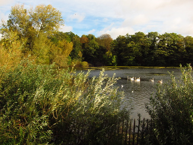Highgate No 1 Pond