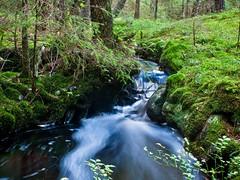 Creek (dubbelt_halvslag) Tags: longexposure tree green nature wet water creek canon landscape woods long exposure raw sweden schweden natur calm  foam sverige scandinavia westcoast vatten bohusln skum strmstad bck g10 nsinge lngexponeringstid nsingesen
