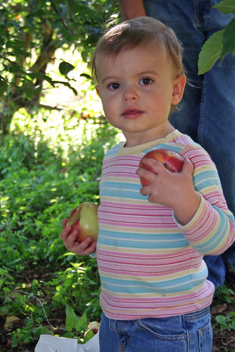 Apple Pickin 2011