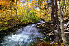 Cascade in a Rainbow Forest (Darvin Atkeson) Tags: california mountain lake color fall colors creek forest river waterfall rainbow stream fallcolor nevada sierra aspen range cascade lundy highsierra easternsierra darvin atkeson darv liquidmoonlightcom