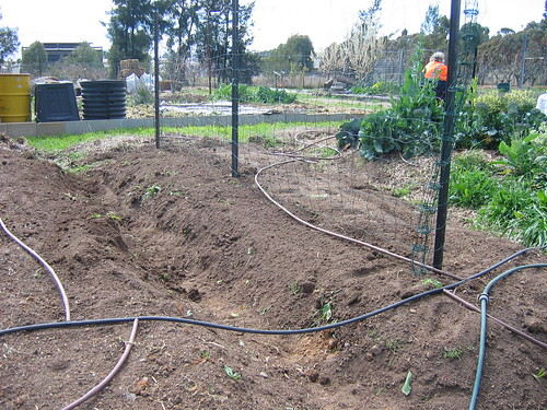 Pea trench - complete
