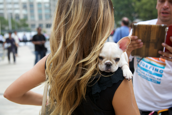 6150398237 9c60f30b91 o by far, the cutest accessory at fashion week
