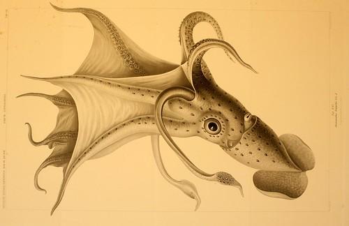 016-Die Cephalopoden 1910- Carl Chun