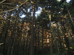 Forest on the Appalachian Trail Photo