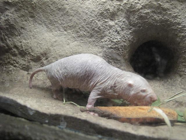 Zoo 0391