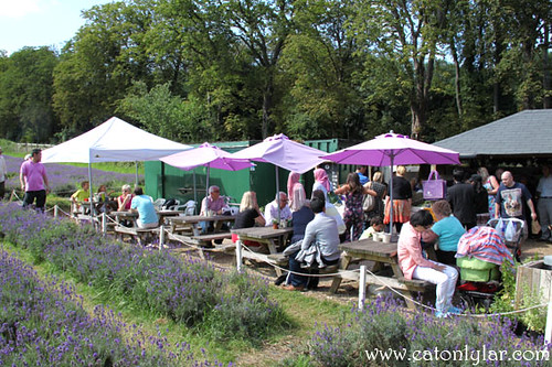Café/shop, Mayfield Lavender