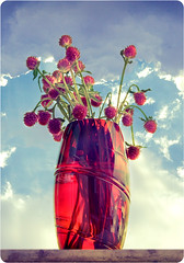 Red Flowers...Blue Sky (Mohammad Reza Rostami) Tags: red sky flower afternoon sweet blu vinaceous