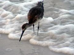 Fort DeSoto Park, Pinellas County, Florida (asterisktom) Tags: county usa beach gulfofmexico america us gulf unitedstates florida   pinellas estadosunidos eeuu  2011  fortdesotopark