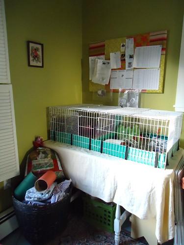 guinea pig corner
