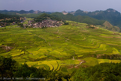 Gaoyao Village Rice Terraces, Guizhou (adventurocity) Tags: china travel vacation tourism rural landscape photography photo scenery asia photographer tour village rice farming terraces harvest picture visit tourist traveller adventure prc agriculture guizhou miao visitor traveler peoplesrepublicofchina southwestchina gaoyao adventurocity culturalminoritiesandclassicallandscapes