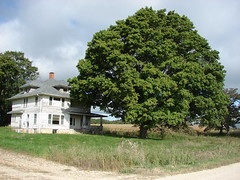 Lifelong companions (David Sebben) Tags: county tree abandoned farmhouse rural oak alone iowa cedar massive vacant churchill strong lonely winston enormous
