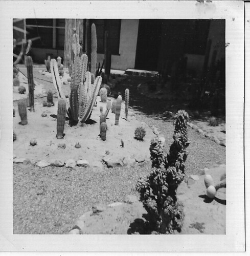 CACTI AND ROCK GARDEN APT: CORONADO, CALIFORNIA 1960 by roberthuffstutter