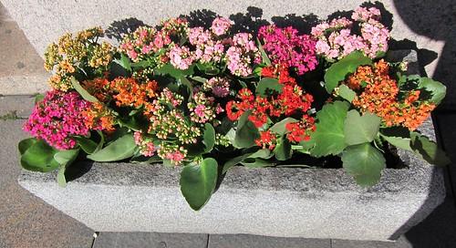 Kukkia sementtilaatikossa by Anna Amnell
