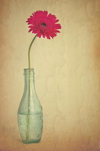 フリー写真素材, 花・植物, ガーベラ 花瓶,