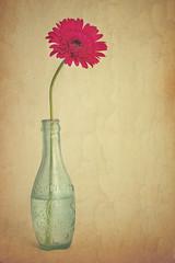 [フリー画像] 花・植物, ガーベラ 花瓶, 201109260700