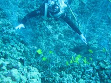 Big Island diver faces charges after reporting reef damage