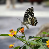 Butterfly on flower #2 (e.nhan) Tags: life light flower art nature closeup butterfly spring colorful dof bokeh butterflies backlighting enhan