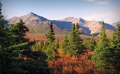 Autumn in Denali - Alaska Landscape (blmiers2) Tags: travel blue autumn trees red mountain mountains green fall nature alaska canon landscape geotagged photo powershot g6 denali autumnindenali blm18 blmiers2