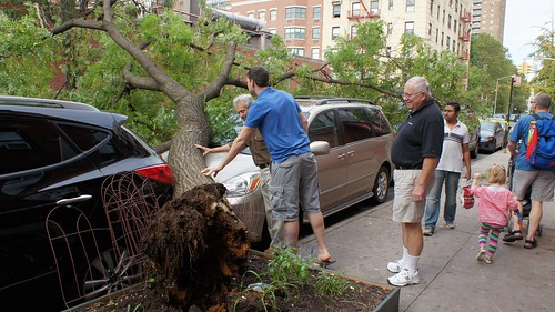 Tree down on E. 6th St., East Village