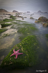 Wandering Starfish at Seal Rock (* Ian Rogers *) Tags: statepark park fish rock oregon star coast moss state starfish seal oregoncoast mossy sealrock mossyrock southernoregoncoast sealrockstatepark