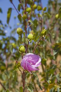 mawson plateau - sept 2011 - ef