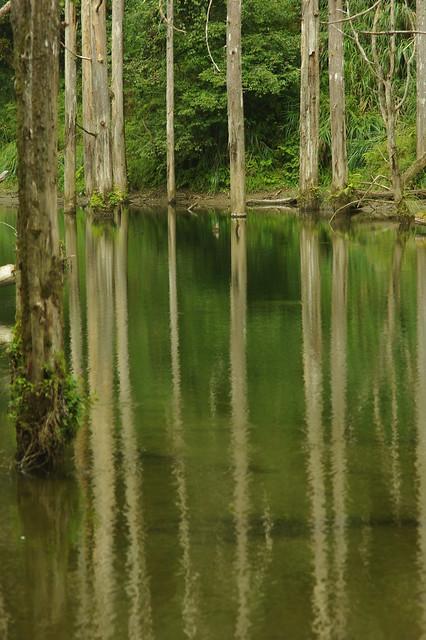 與水漾森林的第一次接觸