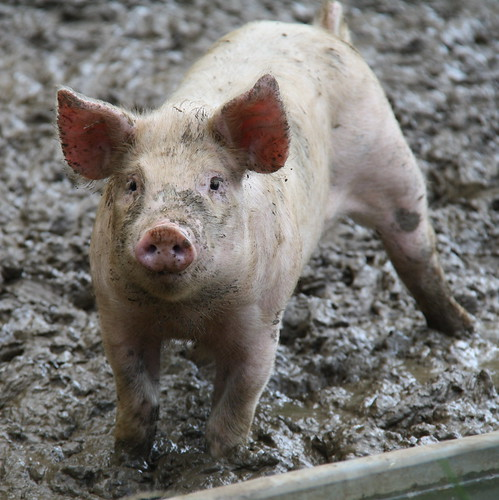 Defense Budget Pork