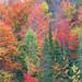 Nature's Painting. Photo: Susan Dornan, Ft. Edward NY.