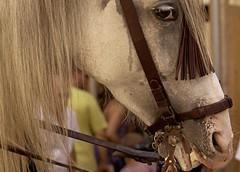 Smile, please (Mai Do Asensi) Tags: horse caballo horseportrait