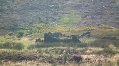 Lost in time (Screwdriver32,more off than on :-() Tags: camping scotland fuji finepix fujifilm ayr galloway ayrshire hs10 hs11 myfuji gallowayforrest screwy32 screwdriver32 myfjui whitespoutlane johnscrewdriver