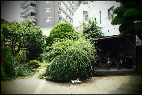 """110824 033 福岡市博多区EP3 17 2.8""""#"""