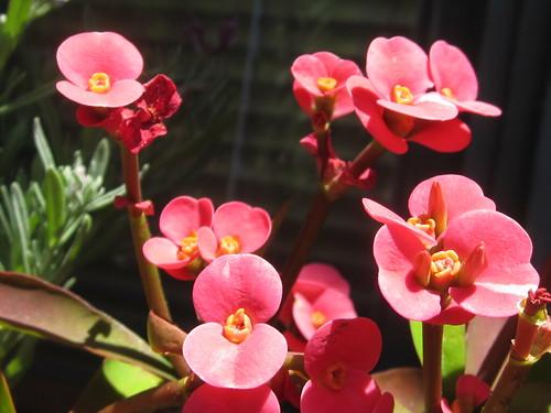 Sunlit Pink Flowers