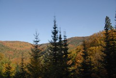DSD_7735 (Greying_Geezer) Tags: autumn ontario canada fall colors colours scenic trains autumncolours railways railroads saultstemarie on algoma agawacanyon traintour