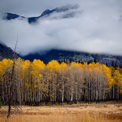Misty Forest (Explored) (APOLLO13ZX) Tags: mist calgary fall leave forest canon eos ii alberta l banff f28 70200mm johnstoncanyon explored 5dmarkii