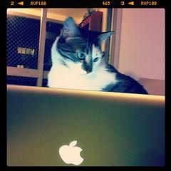 MacFalda Pro (Andr Corra) Tags: cats cat feline gatos gato felinos felino felidae