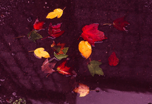 Urban Autumn Foliage