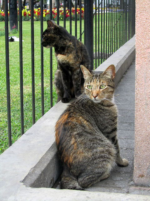 Cats in Parque Kennedy (Miraflores, Lima)