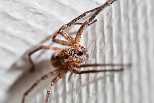 L'araignée au plafond by esquimo_2ooo