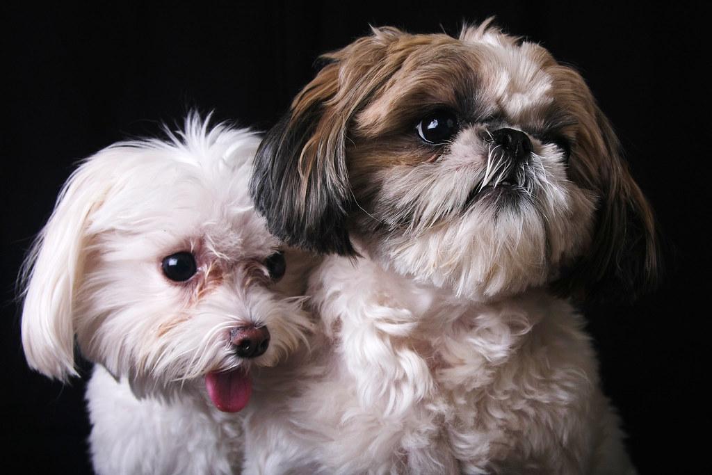 Stella & Bugz
