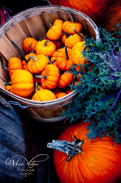 Pumpkins 102