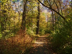 Calming (Renee Rendler-Kaplan) Tags: autumn people fall dogs birds forest woods october squirrels gbrearview kodak path small birding peaceful deer fallingleaves suburb forestpreserve kodakeasyshare evanston pathway gapersblock wbez awalkinthewoods chicagoist grantst 2011 dappledlight notscary manageable evanstonillinois clearsmymind reneerendlerkaplan mygotoplaceforcalmandpeace wonderfulinanyseason
