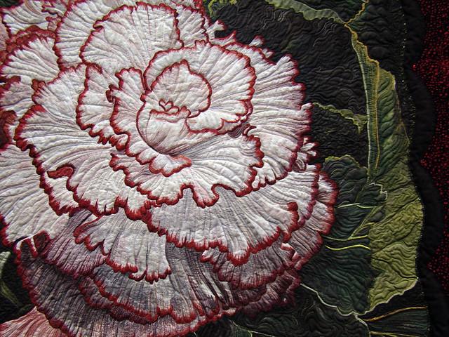 DSC06814 Begonia Picotee Lace - Pat Durbin detail
