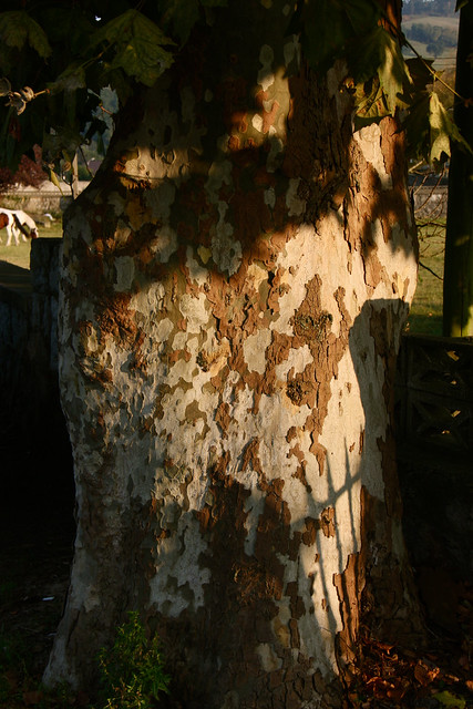 Sunset on Bark with Horse