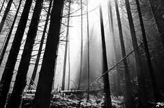 Bufera.... di luce _ B&W (Riccardo Brig Casarico) Tags: blackandwhite bw italy sun white black mountains nature water rain alberi wow landscape photography photo blackwhite reflex nikon euro
