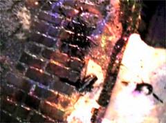 """Metal Heart"" - Garbage (Lord Solaris) Tags: street cup broken wet water glass dark video rainbow break dirty cobblestone rainy oil capture sheen liquid shatter splat blot"