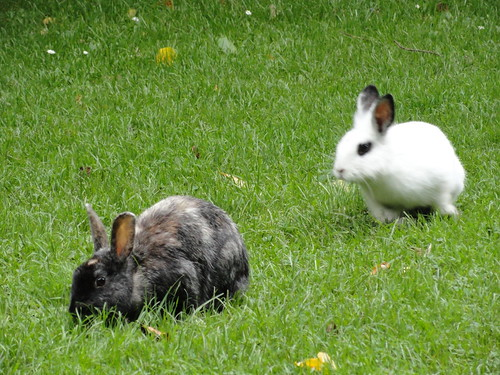 DSC00126 Animalitos en Stadspark - 6143219831 64b9b5e413 - Animalitos en Stadspark