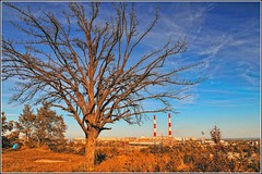 A lonely tree. (lights2008) Tags: sky colors beauty gold nikon tamron kiev kyiv   kiew       kartpostal tamron175028